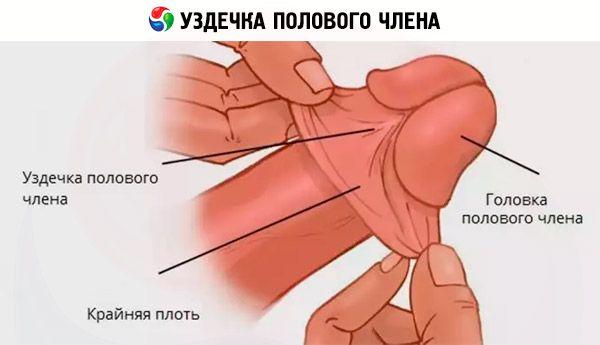 naisen erektio frenulumin repeämä